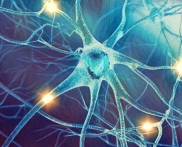 Nutrientes que te ayudarán a mejorar el rendimiento cerebral