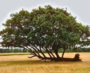 La resiliencia y cómo podemos desarrollarla