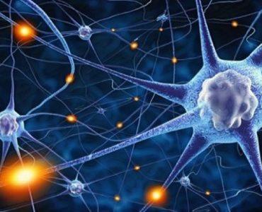 El efecto de las neuronas espejo y nuestro desarrollo cultural