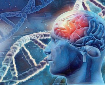 Qué es lo que estudia la neuropsicología