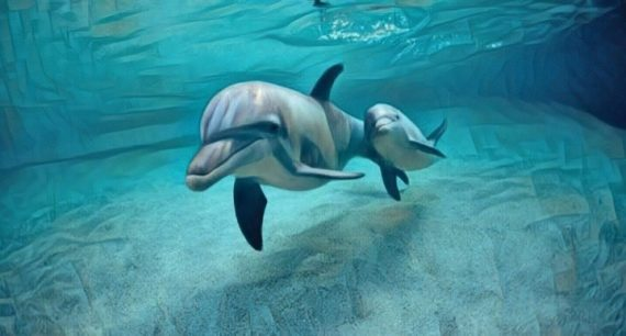 La delfinoterapia sus pros y contras