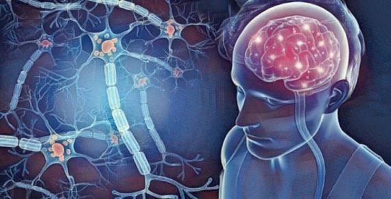 Cerebro y conexiones neuronales
