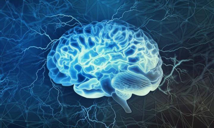 La amígdala y su influencia en las emociones