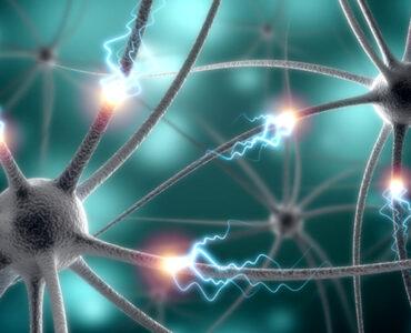 Conexiones neuronales y los recuerdos