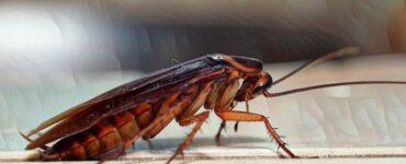 Cómo superar el miedo a las cucarachas y otros insectos