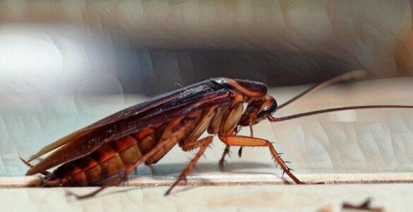 insectofobia o entomofobia