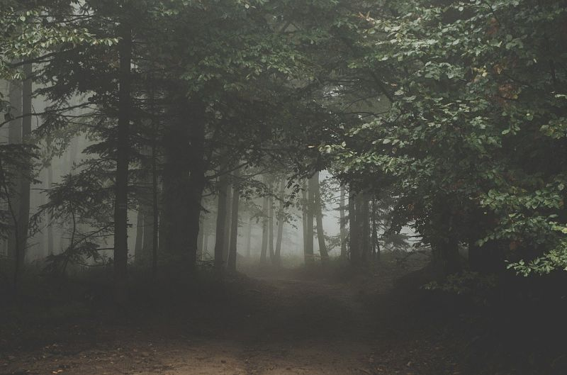 Una película de terror en el bosque
